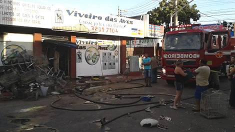 Loja de animais pega fogo e acaba matando inúmeras aves | Goiás News: Notícias para o Sul Goiano 24hs